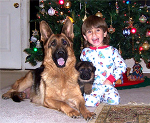 German shepherd puppies with Aidan - Janara and Amigo von gunbil 2004