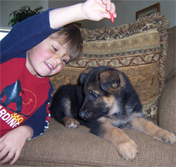 Aidan Gunbil playing with puppy...