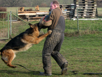Personel Preotection Dog Training