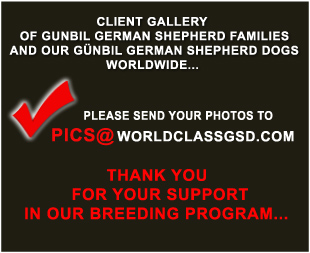 If you would like to send us your photos with your family and/or your dogs, please use this email address.