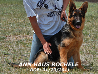 Ann vom Haus Rochele - For Profile, please lcick here.