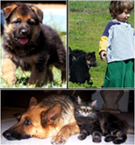World Class German Shepherd Dogs