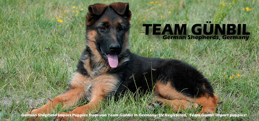 German shepherd association germany