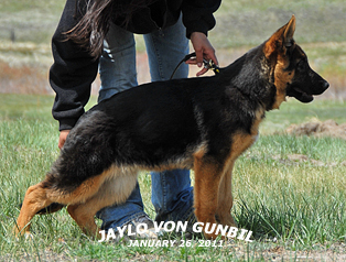Jaylo von Gunbil - For Profile, please lcick here.