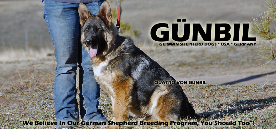 Gunbil German Shepherd Testimonails