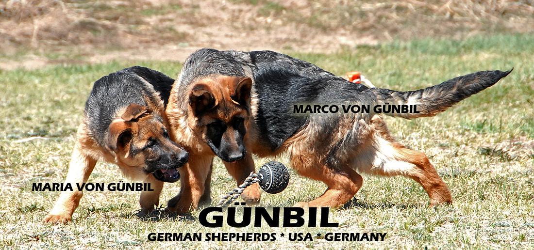 master in germany